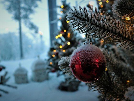Почему нельзя посадить ёлку возле дома — толкование приметы
