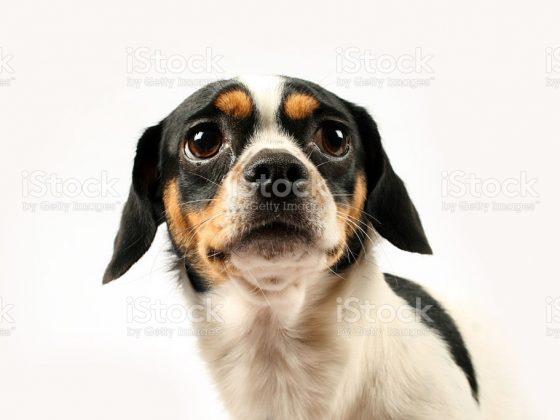 Почему нельзя смотреть в глаза собаке — значение приметы