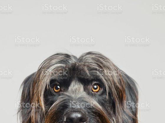 Собака может увидеть ваш страх