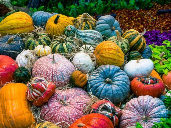 Народные приметы на урожай — по временам года и регионам