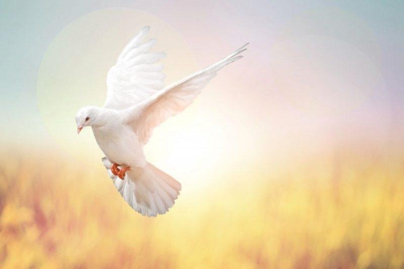 Видеть во сне голубь белых